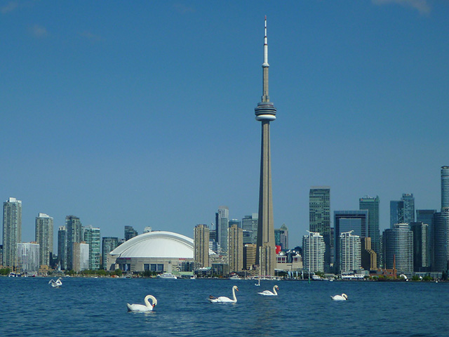 Swans and CN Tower PBI